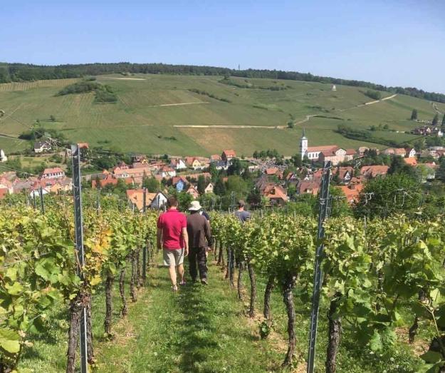 Zotzenberg, Elzas