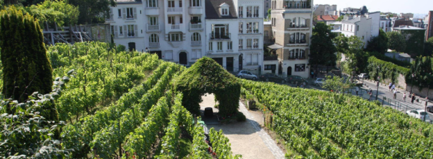 wijngaard_montmartre